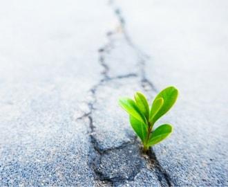 Resilienztraining für Führungskräfte (Selbstanwendung)