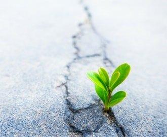 Resilienztraining für Führungskräfte